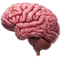Brain neuroscience EduTECH