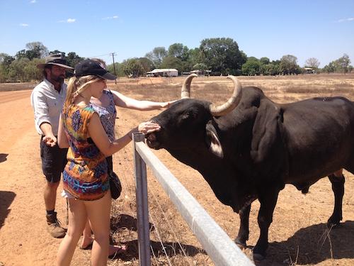 Mount Bundy's bull